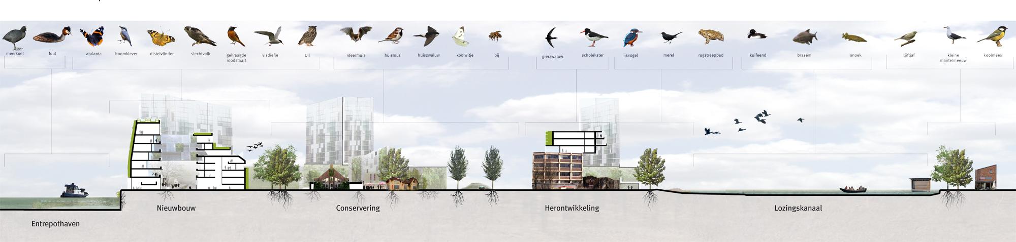 DS_ecologische doorsnede_web