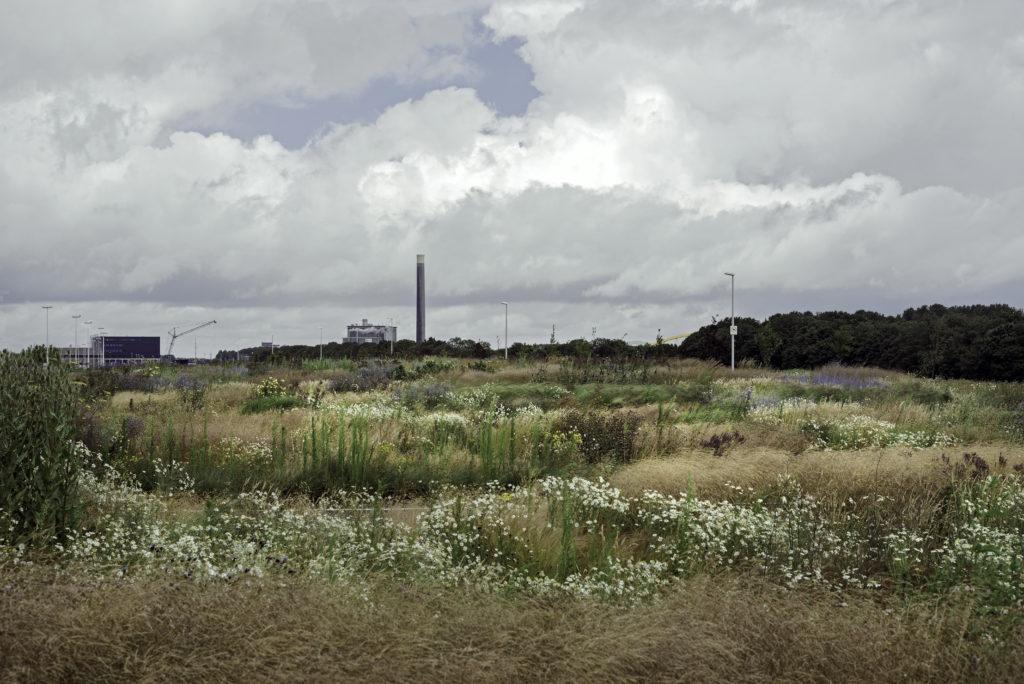 Leidsche Rijn, 8 juli 2015 Willem Alexanderpark Foto: Walter Herfst