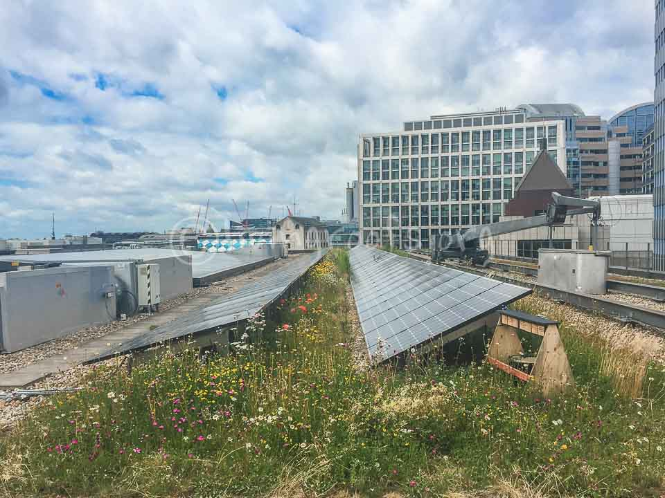 Standard-Chartered-Bank-London-Biosolar-roof-3 after (c) livingroofs org